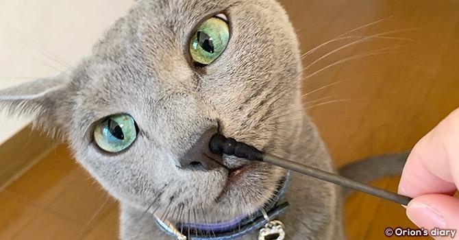 猫の体調不良