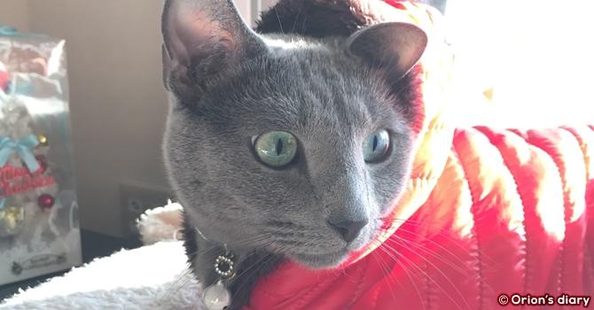 猫用冬アウター