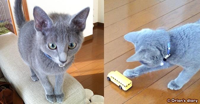 子猫オリオン