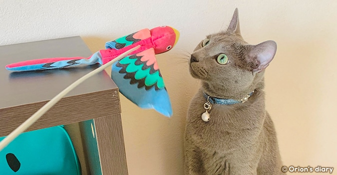 オリオンと鳥さん