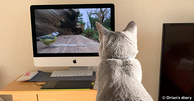 猫用YouTube